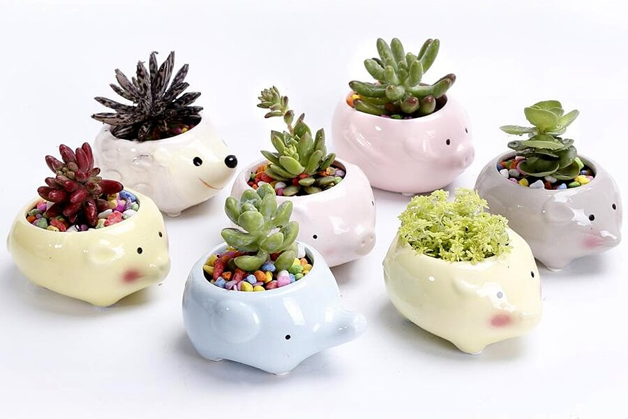 Animal shaped ceramics make remarkable planters with a whimsical twist.