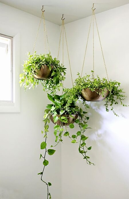 A room's corner is the perfect place for hanging house plants from the ceiling.
